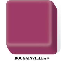 boucainvillea